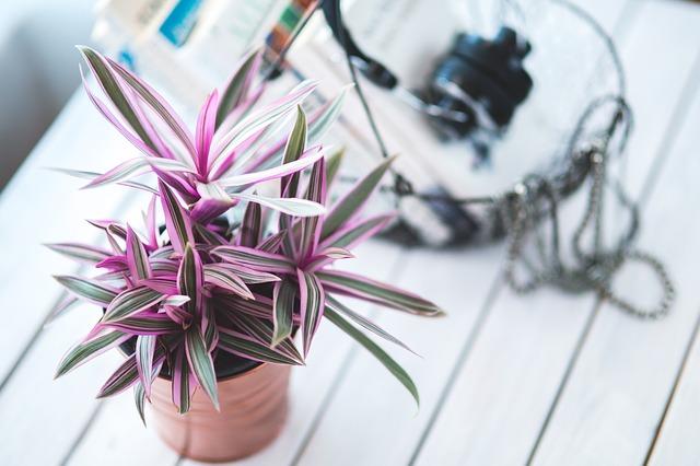 rostlina zajímavých barev